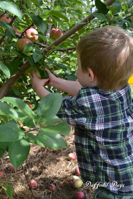 jesse picking apple