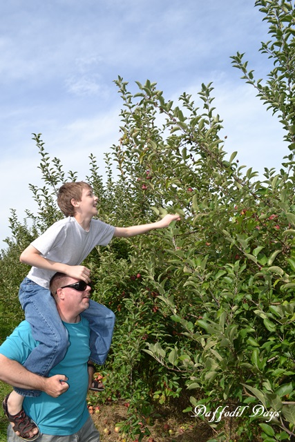 wes and kenny picking apples
