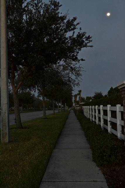 Moonlight walk pre-dawn